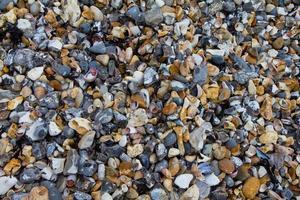 stenar, ogräs och snäckor på en strand