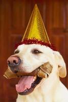 hund födelsedagsfest foto