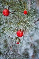 röda julgranskulor foto