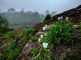 blomma på sten vid skogen foto