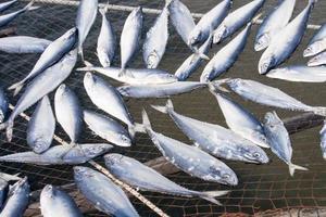 torkad saltad fisk foto