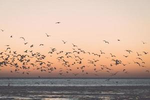 fåglar som flyger i solnedgången över frysta havet - retro vintage
