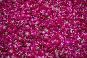 rosenblad bildar blomsterrabatt foto