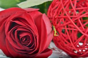 röd ros foto