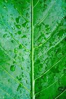 vått blad
