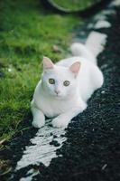 vit katt som leker på vägarna foto