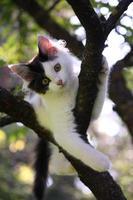söt kattunge vilar på trädgrenen foto
