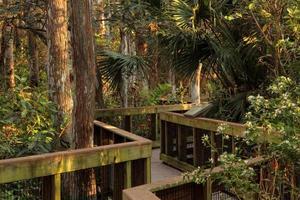 strandpromenad för cypress träsk