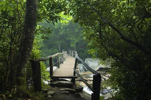 gångbro, skorstenstoppar, stor rökig mtns nat park, tn foto