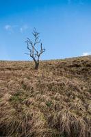 ensamt träd i dovedale, toppdistrikt nationalpark, Storbritannien