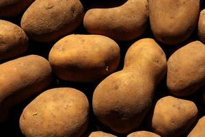 fotografering av dammiga potatisar för matbakgrund foto