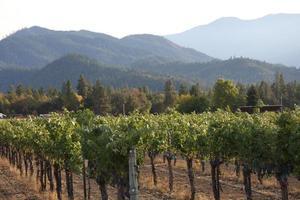 Oregon vingård foto