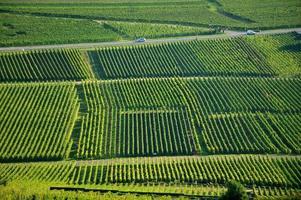 Flygfoto över vingårdar i Alsace-Lorraine, Frankrike foto