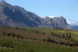 vingårdar vid stellenbosch stad, sydafrika foto