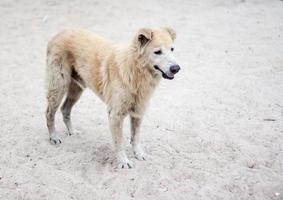 herrelös hund på stranden foto
