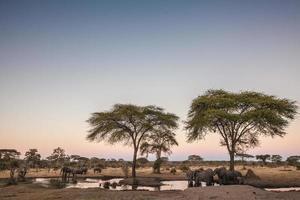 elefanter runt ett vattenhål i skymningen foto