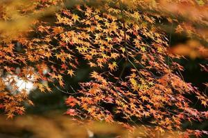 japansk trädgård foto