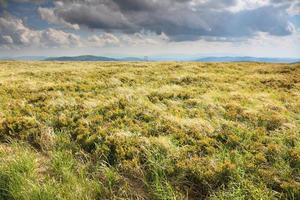 natur. fält bergslandskap på sommaren