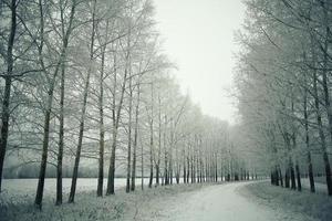 snöig vinterväg i ett fält