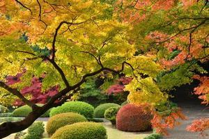 japanska höstfärger foto