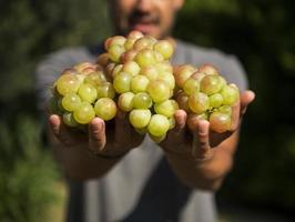 man som håller en massa druvor i sina händer