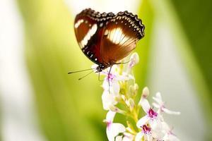 underbar fjäril på blomman foto