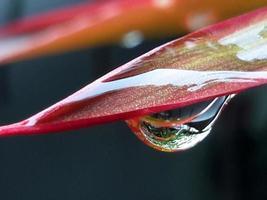 regndroppe på ett blad på nära håll