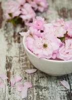 blommor av sakura blommar i en skål med vatten foto