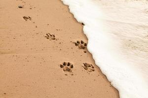 hundvänlig strand foto