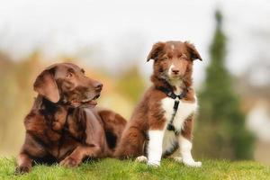 vuxen hund och valp foto