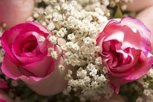rosa rosor och barnets andedräkt på nära håll