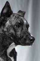 längtande hund foto