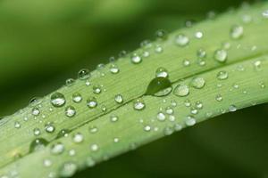 abstrakt bokeh natur - vattendroppar på blad efter regn