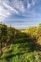 höstens vingård