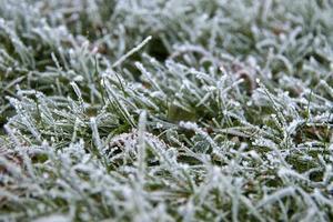 rimfrost på grässtrån foto