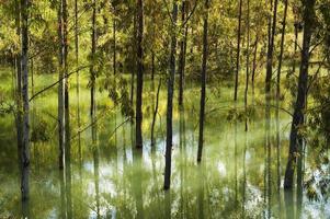 översvämningar, träd i vattnet i reservoar sjön Zahara, Andalusien, Spanien