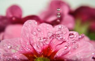 blomma droppe foto