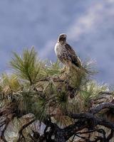 brun och vit fågel foto