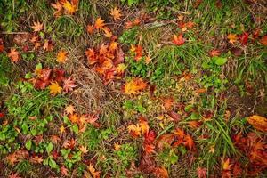 orange och röda blad på marken foto