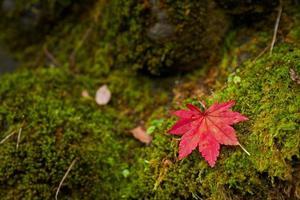 rött lönnlöv på grön mossa foto