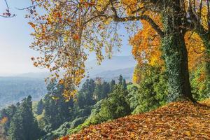skogsbrynet på hösten (Biella, Piemonte, Italien) foto