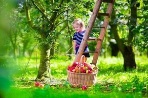 vacker liten flicka som plockar äpplen på en gård