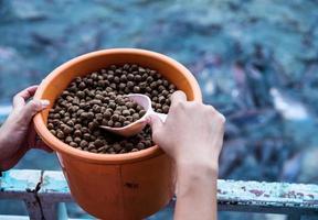 hand som håller en pellet, mat för fisk foto