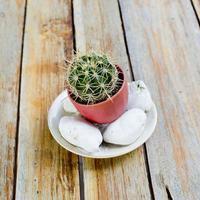 kaktusar i blomkruka med stenar, på träbord