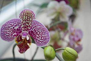 blandad rosa orquidea foto
