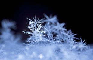 snöflingor foto