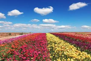 blommande trädgården