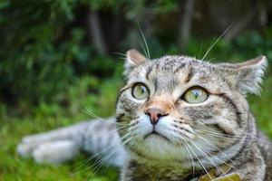 vacker tabby kattunge i trädgården foto