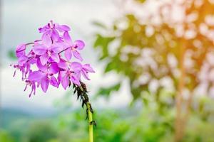 lila blomma i en trädgård
