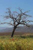ett ensamt träd i öppna slätter foto